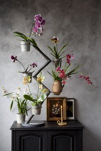 Orchidee Art of Life